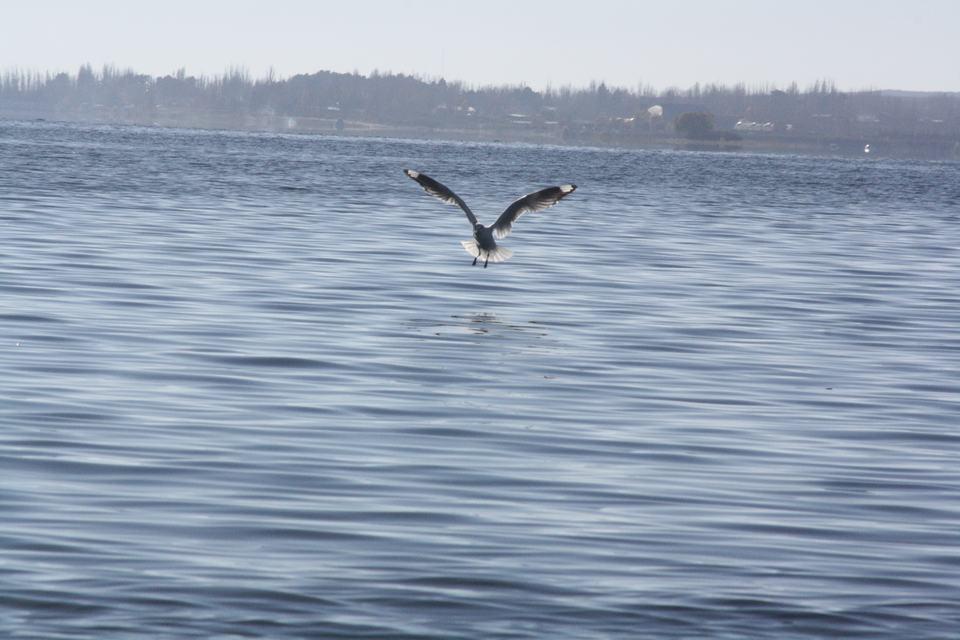 Caba as san rafael caba as y hoteles noticias for Filtros para lagos artificiales